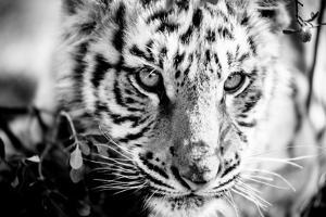 Tiger Cub I by Beth Wold