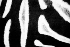 Zebra Fur I by Beth Wold