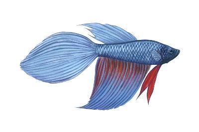 Betta (Betta Splendens), Fishes-Encyclopaedia Britannica-Art Print