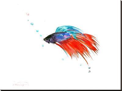 Betta Fish (2)-Suren Nersisyan-Stretched Canvas Print