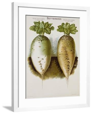 Betteraves Poster--Framed Giclee Print