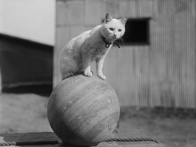 Cat Standing on Wood Ball