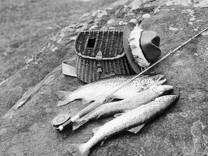 Catch of Trout by Bettmann