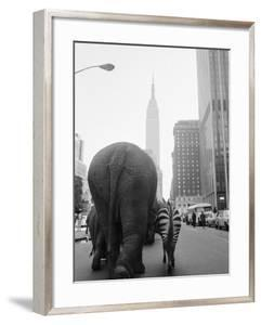 Circus Animals on 33rd Street by Bettmann