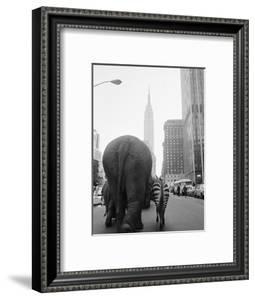 Circus Animals on 33rd Street by Bettmann