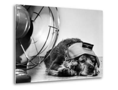 Cocker Spaniel Keeping Cool with Electric Fan