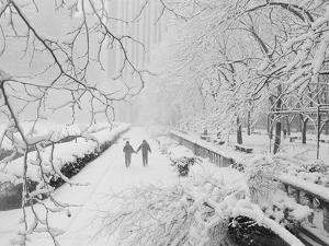 Couple Walking Through Park in Snow by Bettmann