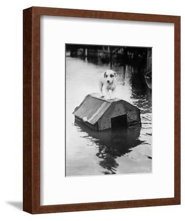 Dog Floating on Doghouse