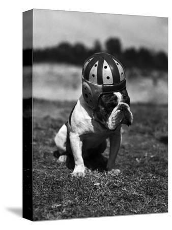 Dog Wearing Helmet on Football Field