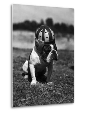 Dog Wearing Helmet on Football Field
