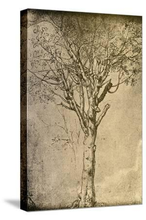 Drawing a Tree by Leonardo da Vinci