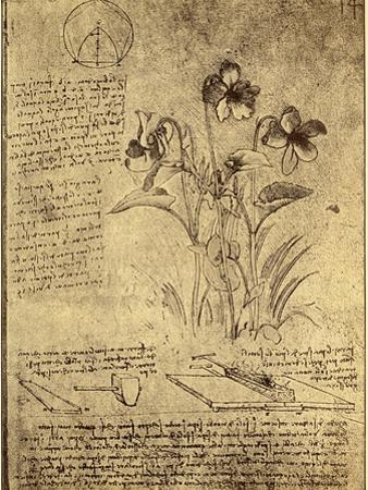 Drawing of Flowers and Diagrams by Leonardo da Vinci by Bettmann