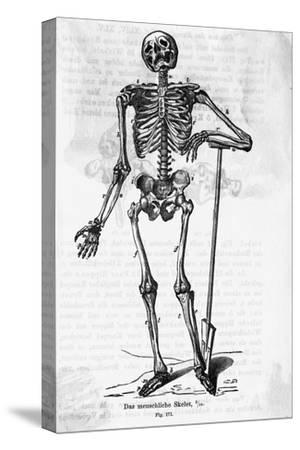 Human Body Skeleton