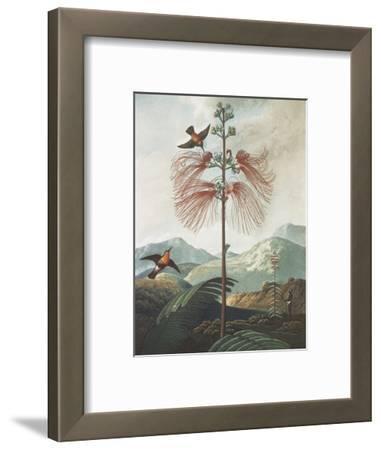 Illustration Depicting Hummingbirds Feeding from a Plant