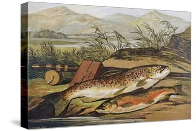 Illustration of Fishing Tackle with a Trout and a Charr