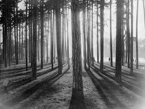 Lights and Shadows Showing Through the Trees by Bettmann