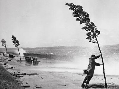 Man Holding onto Tree during Hurricane Carol by Bettmann