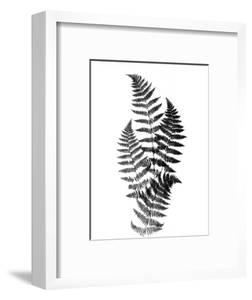Photographic Study Of Fern Leaves by Bettmann