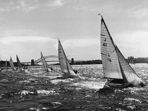 Small Boats Sailing on Sydney Harbor by Bettmann