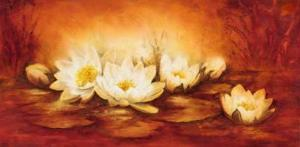 Water Lilies by Betty Jansma