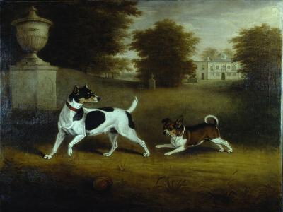 Betty Martin', a Terrier, and 'Idol', a Mongrel, Pet Dogs of the 6th Duke in the Garden at Chiswick-Henry Bernard Chalon-Giclee Print