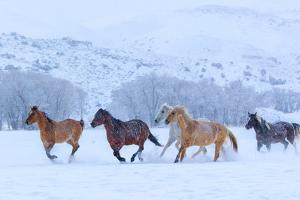 Horses Running in Snow by Betty Wiley