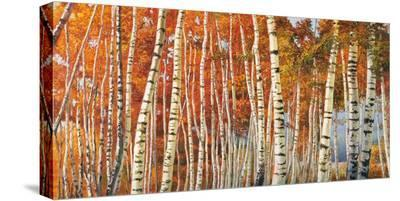 Betulle d'autunno-Adriano Galasso-Stretched Canvas Print