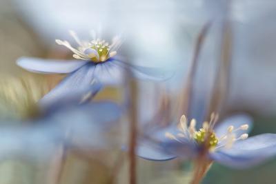 Between the Stalks-Heidi Westum-Photographic Print