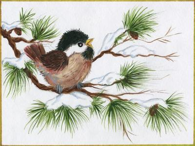 Chickadee on a Pine Tree