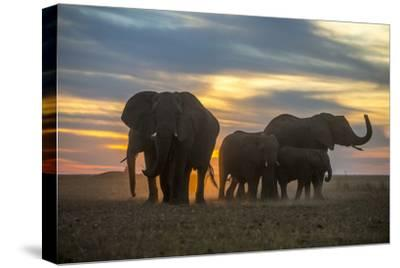 A Herd of an African Elephant, Loxodonta Africana, with Dramatic Sky at Sunset