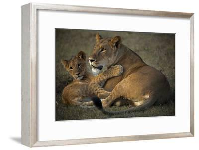 A Lioness and Her Cub, Lying Next to Each Other and Playing