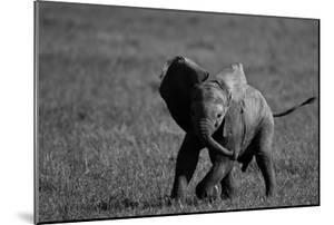 An African Elephant Calf Playfully Running Through a Grassland by Beverly Joubert