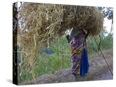 An African Woman Carrying a Large Bundle of Grasses on Her Head