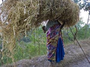 An African Woman Carrying a Large Bundle of Grasses on Her Head by Beverly Joubert