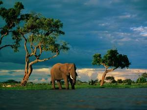 Elephant by a Water Hole on the African Plain by Beverly Joubert
