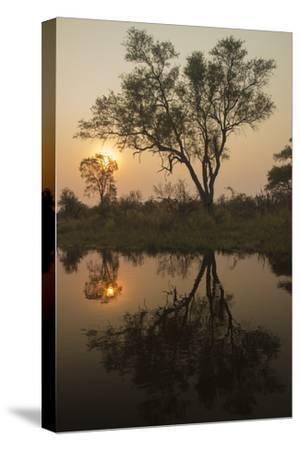 Trees Reflection over the Water During Sunset