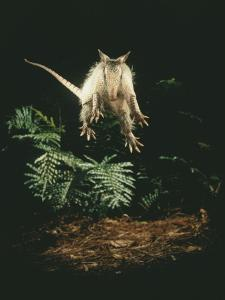 A Fright Reflex Propels This Armadillo into the Air by Bianca Lavies