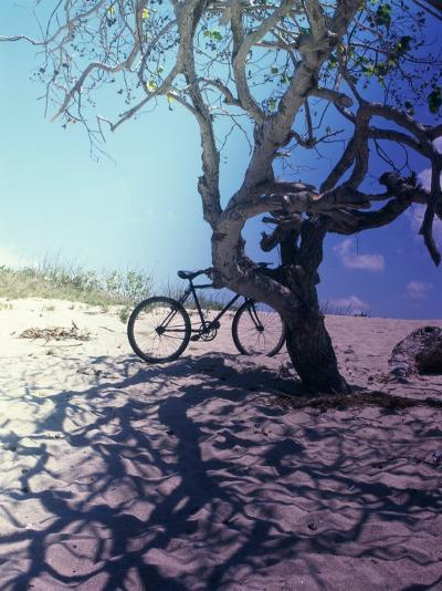 Bicycle Parked Against a Tree--Photographic Print