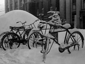 Bicyles at a University Near Sapporo, Hokkaido
