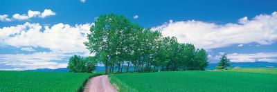 Biei-Cho Hokkaido Japan--Photographic Print