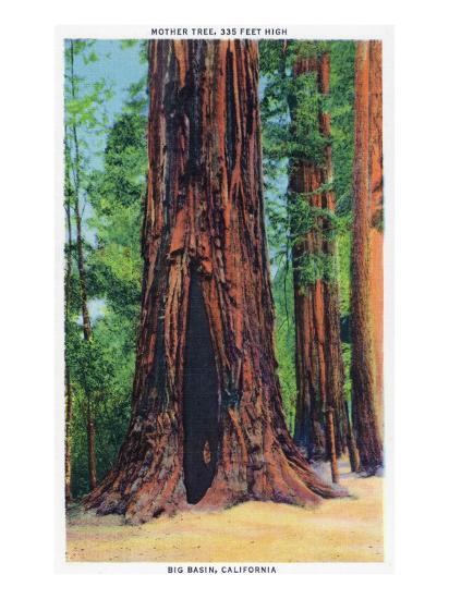 Big Basin, California - Mother Tree-Lantern Press-Art Print