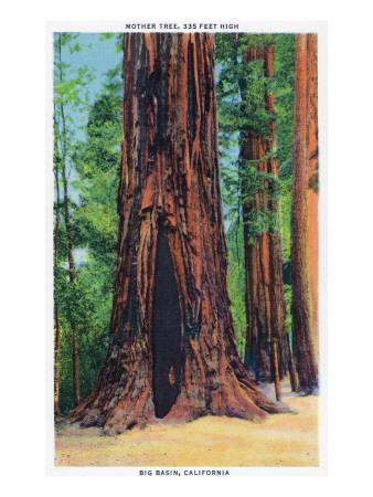 https://imgc.artprintimages.com/img/print/big-basin-california-mother-tree_u-l-q1goyb90.jpg?p=0