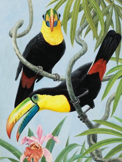 Big-Beaked Birds-R.B. Davis-Giclee Print