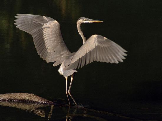 Big Bird-J.D. Mcfarlan-Photographic Print