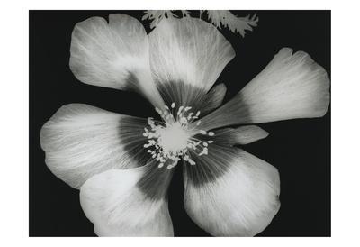 https://imgc.artprintimages.com/img/print/big-blossom-iii_u-l-f6fy1e0.jpg?p=0