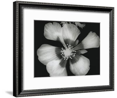 Big Blossom III-Albert Koetsier-Framed Art Print