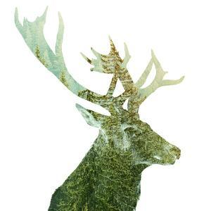 Big Buck Antlers in the Forest