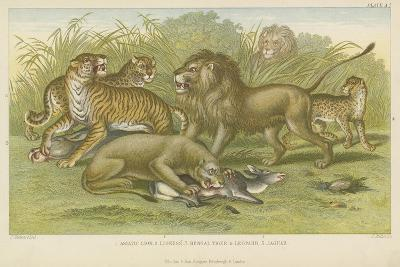 Big Cats--Giclee Print