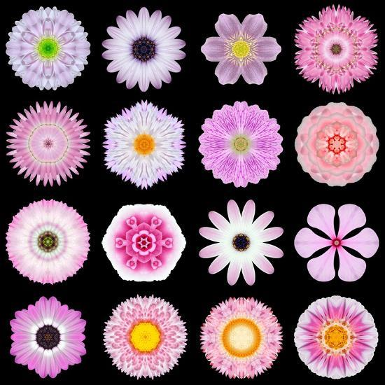 Big Collection of Various Pink Pattern Flowers-tr3gi-Art Print