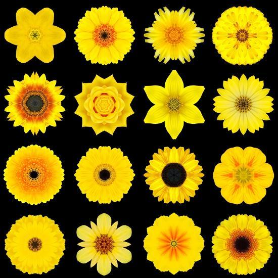 Big Collection of Various Yellow Pattern Flowers-tr3gi-Art Print